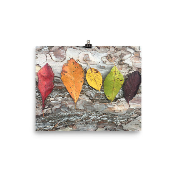 Rainbow Nature Photo Print