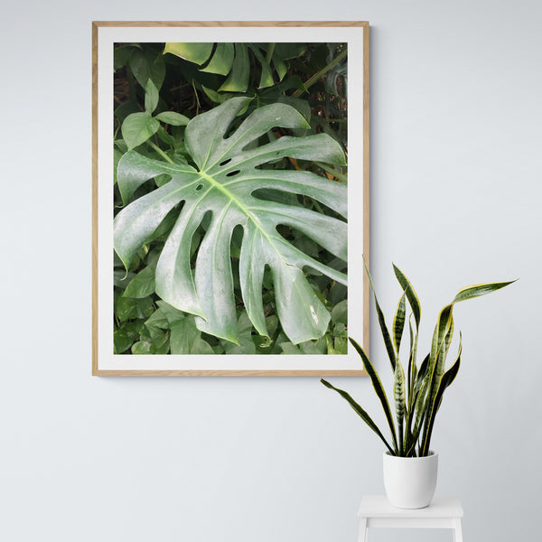 Monstera Photo, Original Tropical Plant Print, Nature Photography