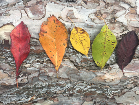 Rainbow Leaves, Nature Photo Print, Fall Wall Art