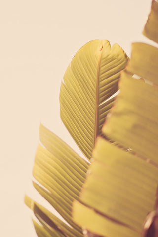 Palm Leaves Photography Print