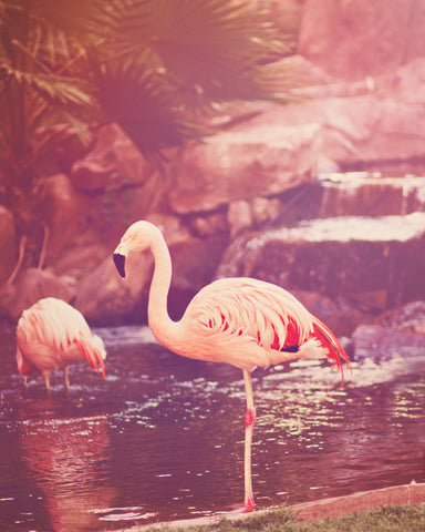 Pink Flamingo Fine Art Photograph