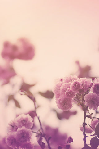 Romantic Pink Floral Photography Print