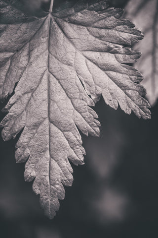 Black and white forest leaf photo