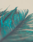 Turquoise Feather Abstract Photograph Print