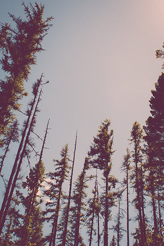 Forest Treetops Retro Rustic Photo Print