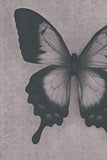 Abstract Black and White Butterfly Photo
