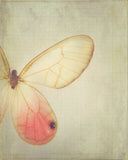 Wings - Dreamy Pink Vintage Style Butterfly Photograph Print