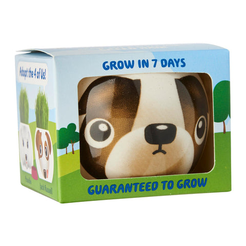 SET of 4 Paris Garden Adopt A Dog Grass Head Kits