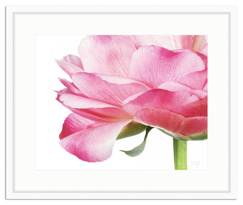 Framed Peony Profile in Pink Irvine Slim / 10x8 (16x14), Art Print - The Pink Pagoda, The Pink Pagoda  - 1