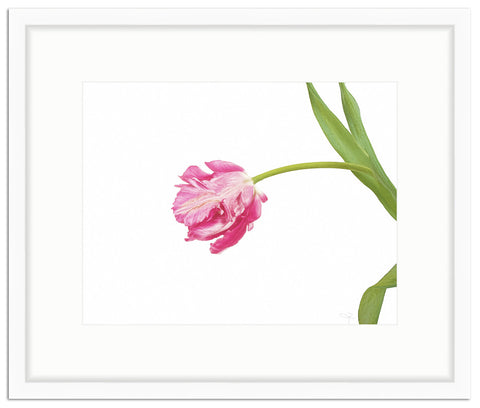 Framed Parrot Tulip Giclée Irvine Slim / 8x6 (14x12), Art Print - The Pink Pagoda, The Pink Pagoda  - 1