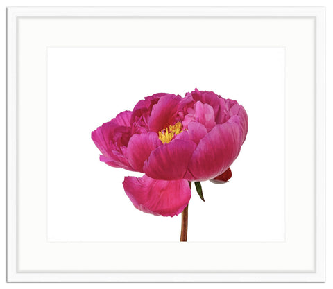 Framed Peony in Magenta Irvine Slim / 10x8 (16x14), Art Print - The Pink Pagoda, The Pink Pagoda  - 1