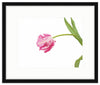 Framed Parrot Tulip Giclée Mercer Slim / 8x6 (14x12), Art Print - The Pink Pagoda, The Pink Pagoda  - 5