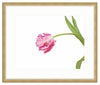 Framed Parrot Tulip Giclée Olympia / 8x6 (14x12), Art Print - The Pink Pagoda, The Pink Pagoda  - 4