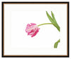 Framed Parrot Tulip Giclée Providence / 8x6 (14x12), Art Print - The Pink Pagoda, The Pink Pagoda  - 3