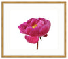 Framed Peony in Magenta Richmond / 10x8 (16x14), Art Print - The Pink Pagoda, The Pink Pagoda  - 6