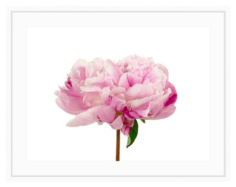 Pink Peony- PRINT ONLY