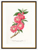 Framed Rose Branch Print