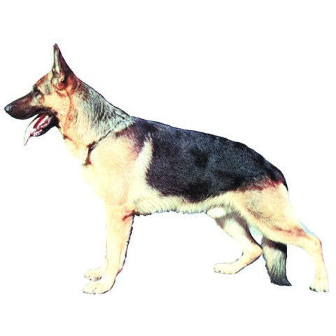 Decal German Shepherd