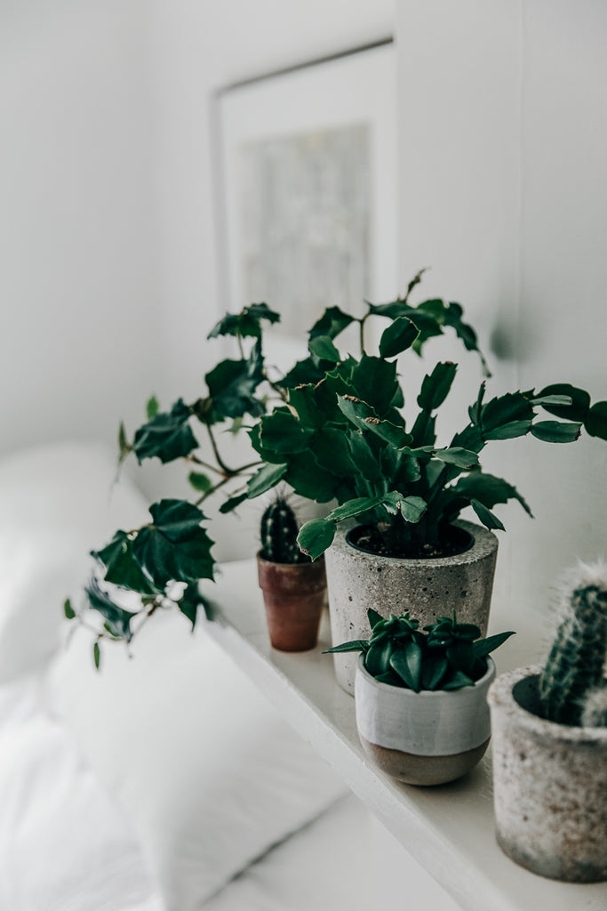 3 Winter Care Tips for Your Indoor Plants