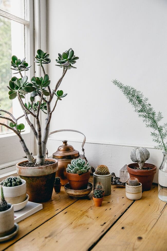 What to care for now : Succulents