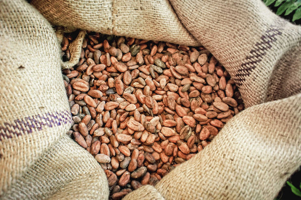 Raw cacao beans in burlap sack