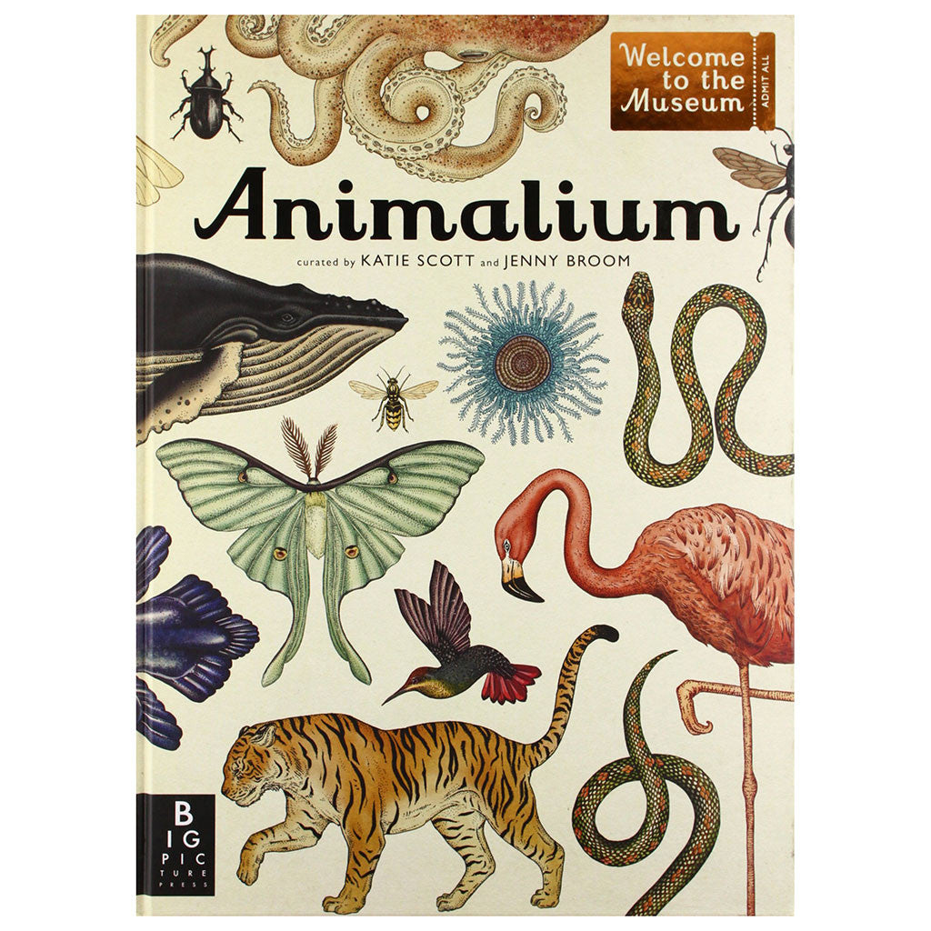AnimaliumAnimalium: Welcome to the Museum by Jenny Broom, Illustrated by Katie Scott