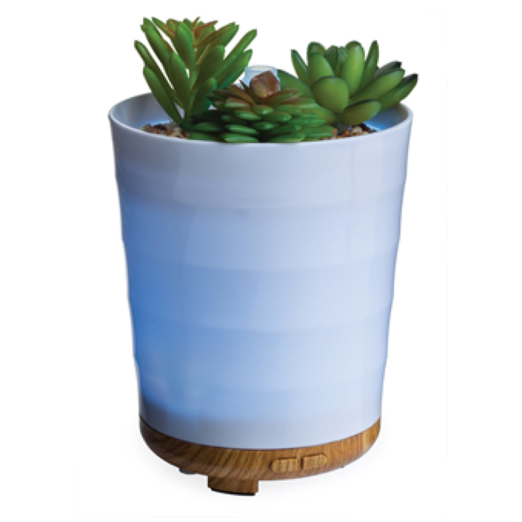 Airome Potted Succulent Essential Oil Diffuser