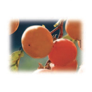 Persimmons Alexandria Fragrance Oil 500 ml