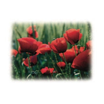 Poppy Field Alexandria Fragrance Oil 500 ml