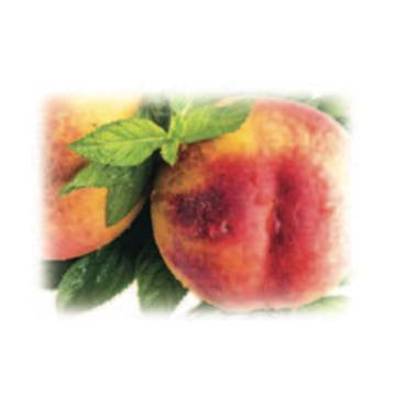Succulent Peach Alexandria Fragrance Oil 500 ml