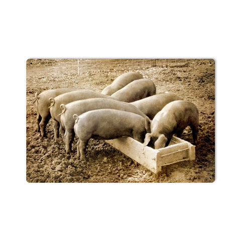 Pigs Behind Metal Sign Wall Decor 18 x 12