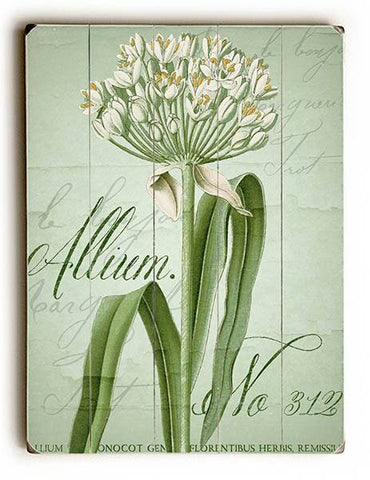 Allium No 312 Wood Sign 13x13 Planked