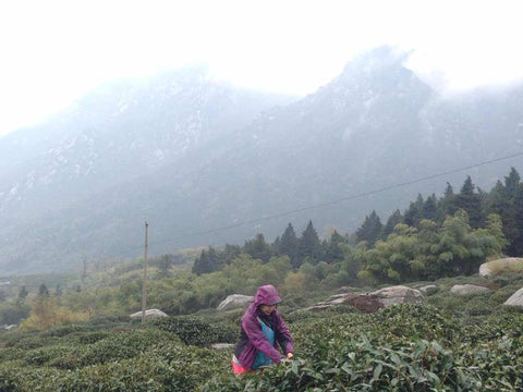 Shunan in the Lu Shan Tea Field by Tea Drunk
