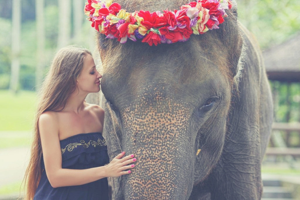 Elephant Good Luck Quote: 10 Inspirational Elephant Quotes You Need Right Now