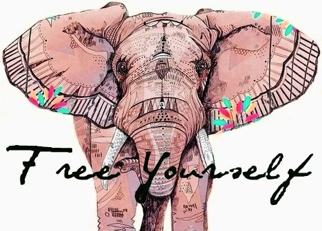 10 Inspirational Elephant Quotes You Need Right Now - Quan