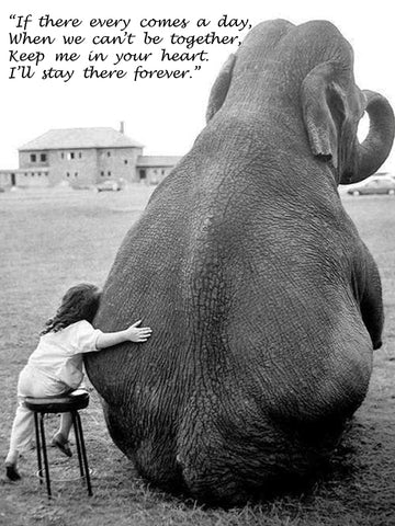 Elephant Quotes Fascinating 48 Inspirational Elephant Quotes You Need Right Now Quan Jewelry