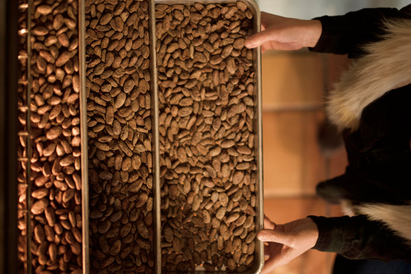 Cacao seeds are loaded on trays and being roasted in the oven