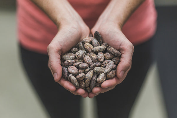 Dried cacao seeds are evaluated before roasting