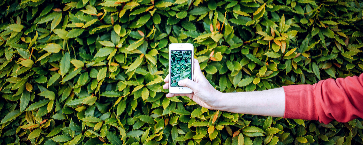 8 Apps That Will Help You Decrease Your Footprint Every Day