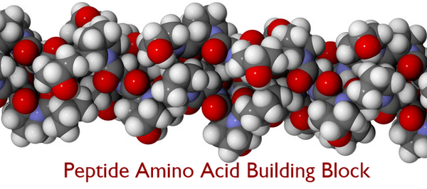 Peptide amino acid building blocks of protein for firm, smooth skin