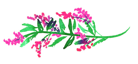 Floral Watercolor Bougainvillea Branch