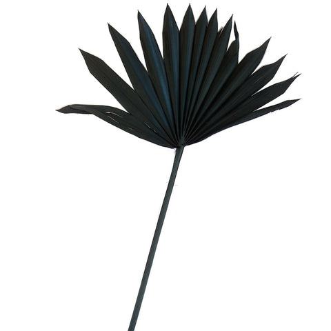 Dried Palm Sun II - Black