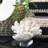 Finger Coral on Stand