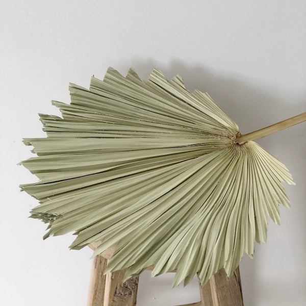 Palm Leaves - Fan - Dried