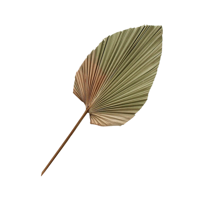 Ombre Dried Palm Spear