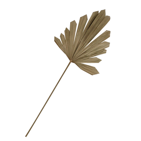 Palm Arrow Dried