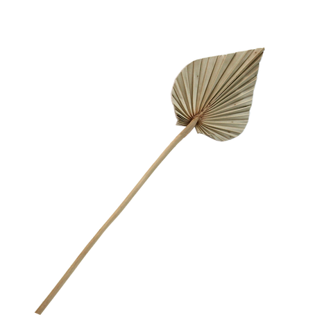 Dried Palm Spear - Small Natural