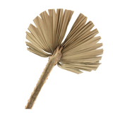 Palm Fan - Dried