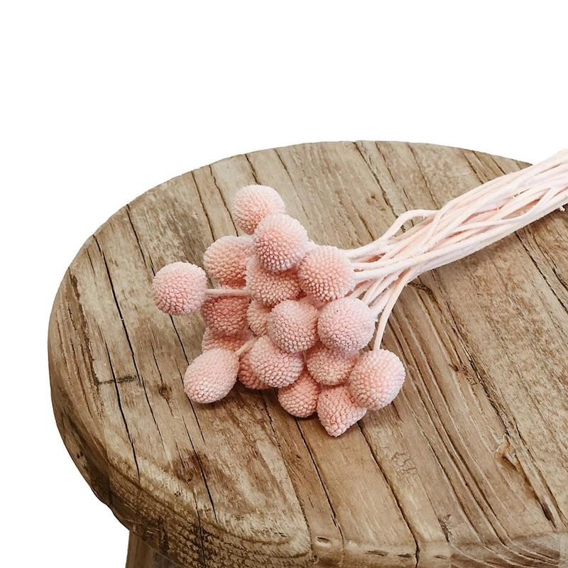Billy Buttons - Pink