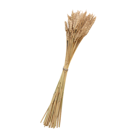 Dried Wheat Stems